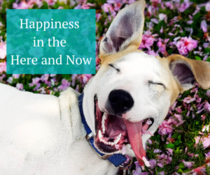 Happiness in the Here and Now